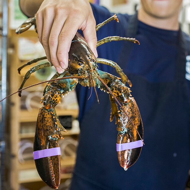 Fresh Maine Lobster Shipped To Your Door