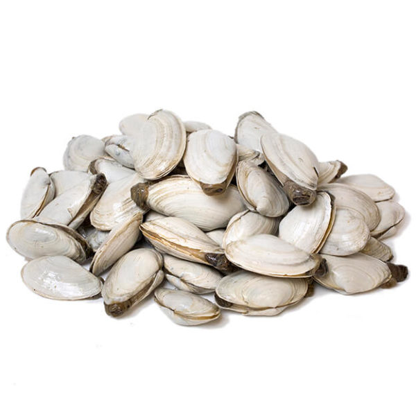 Maine Steamer Clams