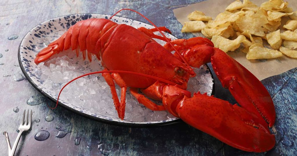 3 Ways to cook Live Maine Lobster