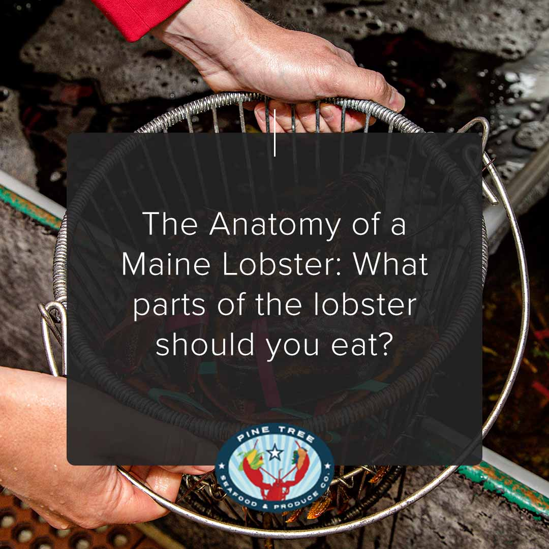 The Anatomy of a Maine Lobster: What parts of the lobster should you eat?