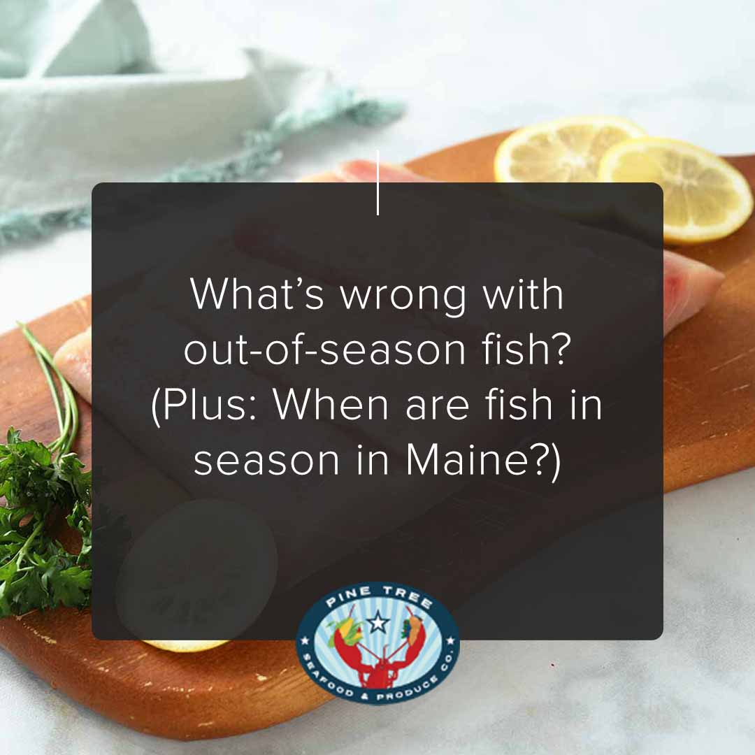 What's wrong with out-of-season fish? (Plus: When are fish in season in Maine?)